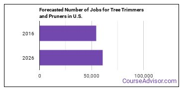 Forecasted Number of Jobs for Tree Trimmers and Pruners in U.S.